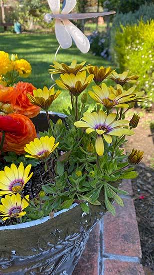 Grow your website organic keyword footprint like a garden
